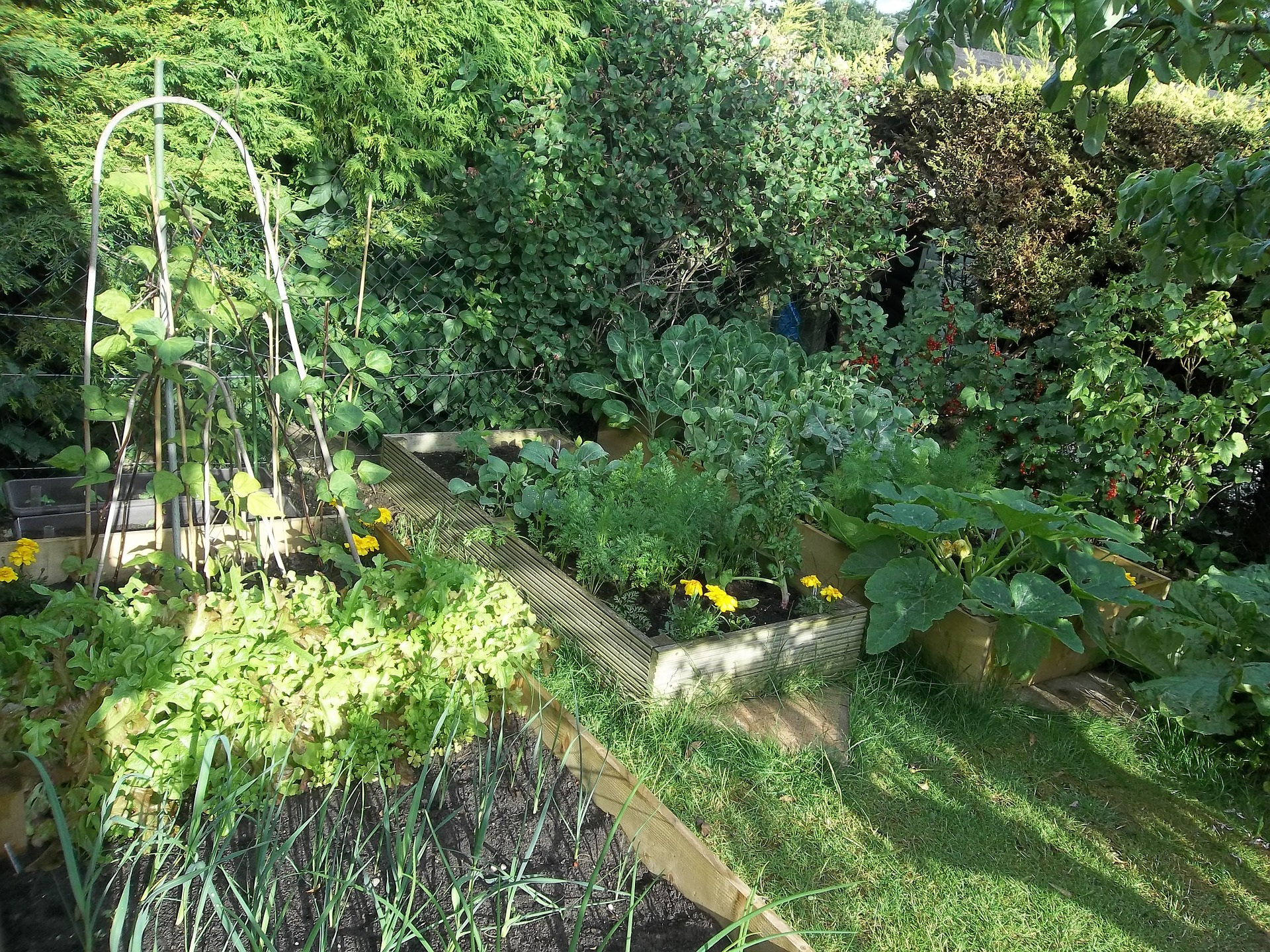 How To Plant Your Own Organic Garden This Summer